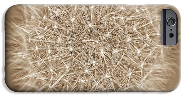 Monotone iPhone Cases - Dandelion Marco Abstract Brown iPhone Case by Jennie Marie Schell