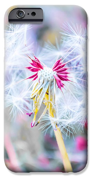 iPhone Cases - Pink Dandelion iPhone Case by Parker Cunningham