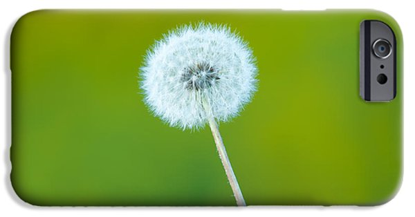 Prairie iPhone Cases - Dandelion iPhone Case by Sebastian Musial