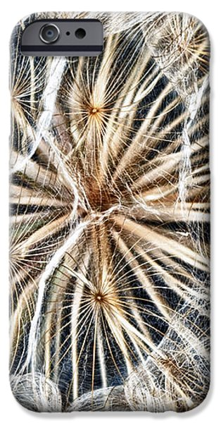 dandelion iPhone Case by Stylianos Kleanthous
