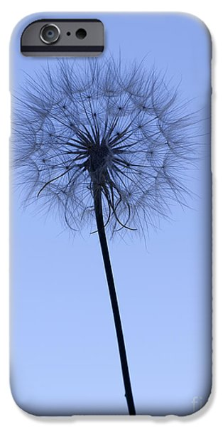 Business iPhone Cases - Dandelion  iPhone Case by Tony Cordoza