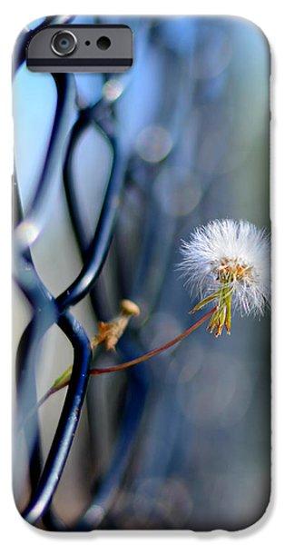 dandelion wish iPhone Case by Laura  Fasulo