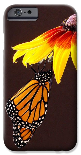 Dangling Monarch iPhone Case by Jean Noren