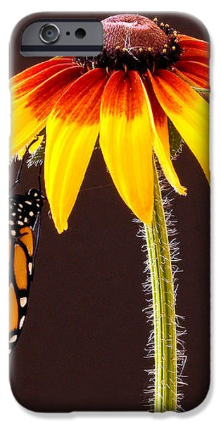 Dangling Monarch iPhone Case by Jean Noren