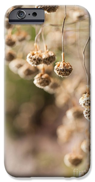 July iPhone Cases - Dangling Thrift iPhone Case by Anne Gilbert