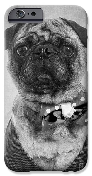 Dog Close-up iPhone Cases - Dapper Dog iPhone Case by Edward Fielding