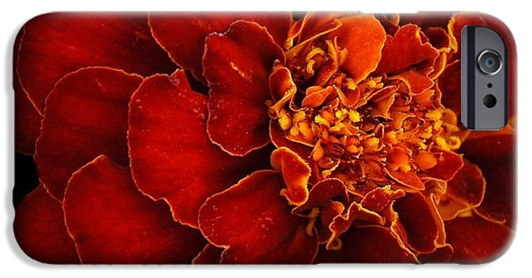 Snake iPhone Cases - Dark Orange Marigold iPhone Case by Patricia Strand