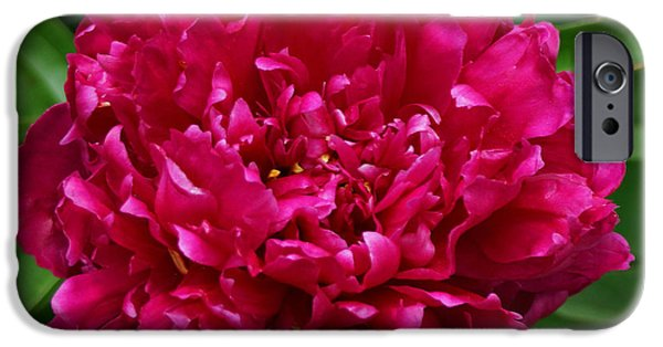Dark Pink iPhone Cases - Dark Pink Peony II iPhone Case by Sandy Keeton