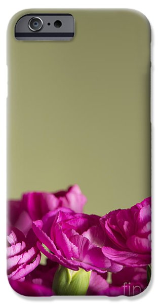 Darling iPhone Cases - Darling Dianthus iPhone Case by Anne Gilbert