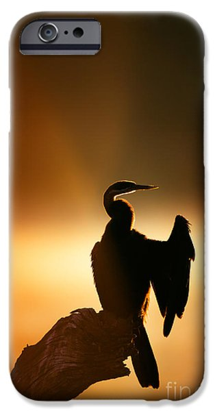 Misty iPhone Cases - Darter with misty sunrise over water iPhone Case by Johan Swanepoel