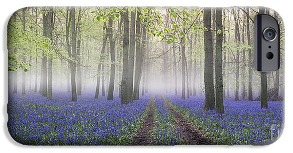 Pathway iPhone Cases - Dawn Bluebell Wood Panoramic iPhone Case by Tim Gainey