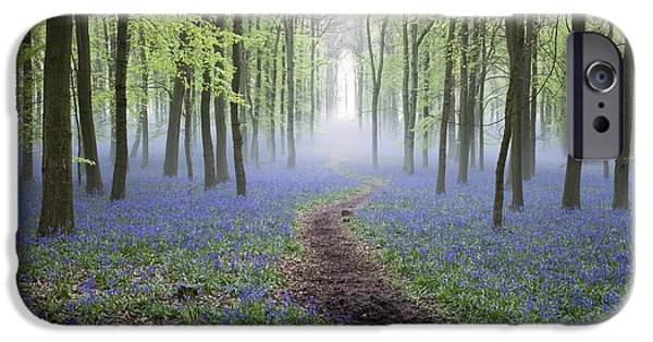 Pathway iPhone Cases - Dawn Bluebell Wood iPhone Case by Tim Gainey