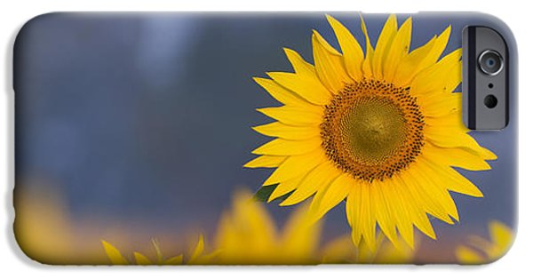 Flora iPhone Cases - Dawn Light on Sunflower  iPhone Case by Tim Gainey