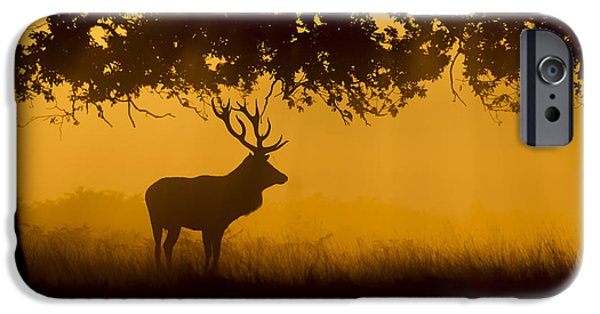 Autumn iPhone Cases - Dawn stag iPhone Case by Kevin Sawford