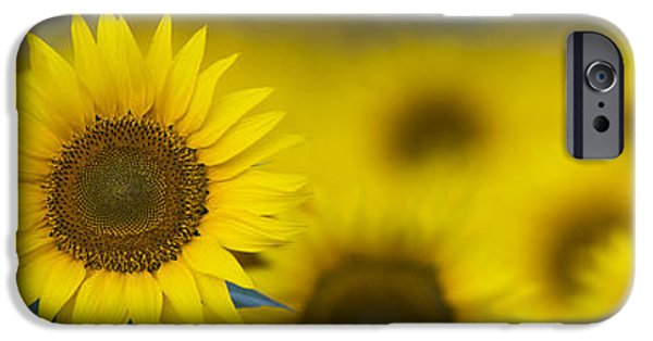 Sunflowers Photographs iPhone Cases - Dawn Sunflower Panoramic iPhone Case by Tim Gainey