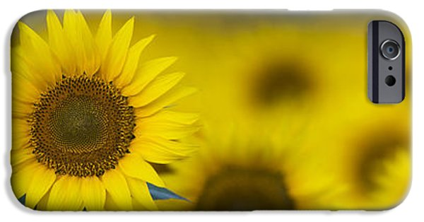 Flora iPhone Cases - Dawn Sunflower Panoramic iPhone Case by Tim Gainey