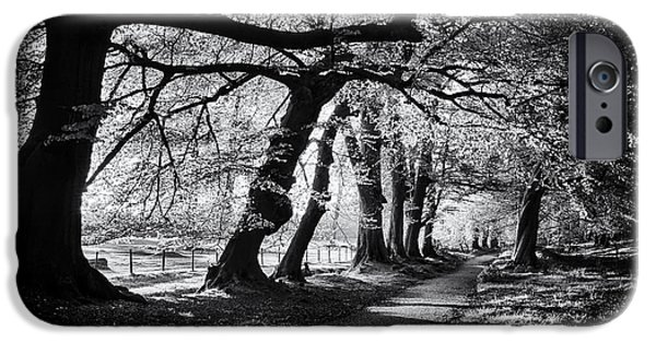 Pathway iPhone Cases - Dawn Tree Light  iPhone Case by Tim Gainey