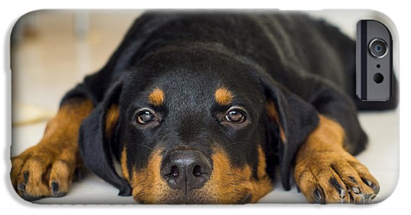 Rottweiler iPhone Cases - Day Dreaming iPhone Case by Aged Pixel