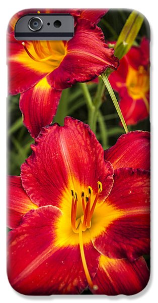 Flora iPhone Cases - Day Lilies iPhone Case by Adam Romanowicz