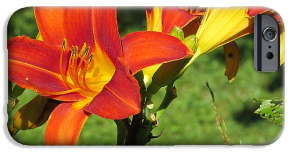 Llmartin iPhone Cases - Day Lily 3 iPhone Case by Linda L Martin