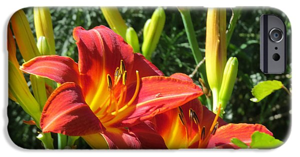 Llmartin iPhone Cases - Day Lily 4 iPhone Case by Linda L Martin