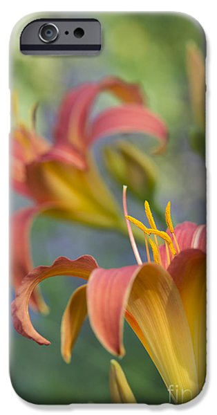 Anther iPhone Cases - Daylily Hemerocallis Pink Prelude iPhone Case by Tim Gainey