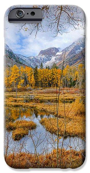 Dazzling Fall Foliage iPhone Case by Mark Whitt