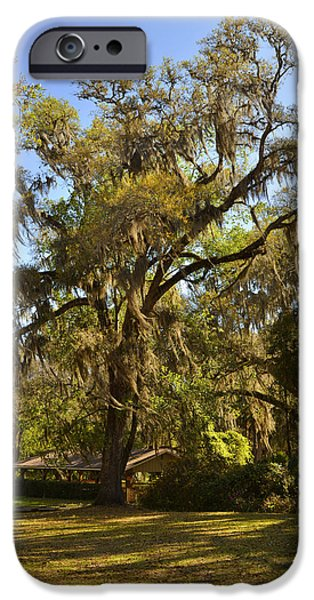 De Leon Springs - Classic Old Florida iPhone Case by Christine Till
