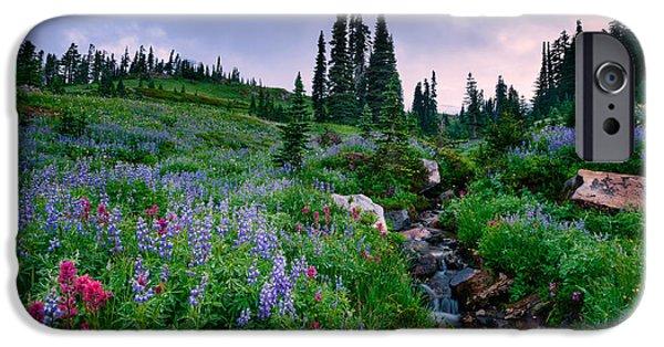 Paradise. Flower Photographs iPhone Cases - Dead Horse Creek Dawn iPhone Case by Dan Mihai
