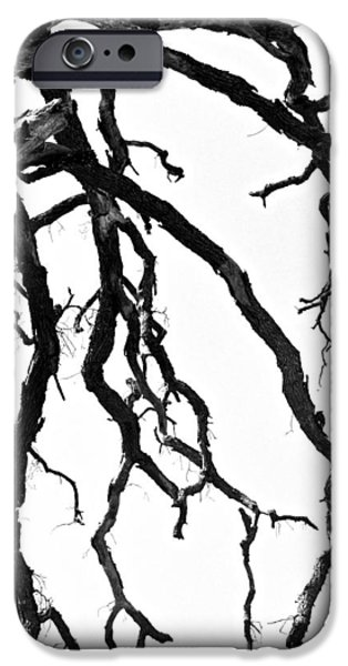 Creepy iPhone Cases - Dead Tree iPhone Case by Christina Ochsner