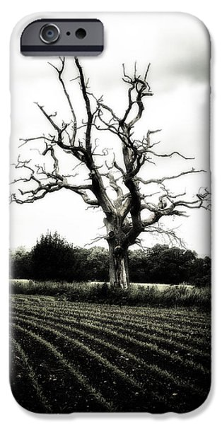 Dark Sky iPhone Cases - Dead Tree iPhone Case by Joana Kruse