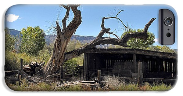 Old Barn Drawing iPhone Cases - Dead Tree iPhone Case by Phil Welsher