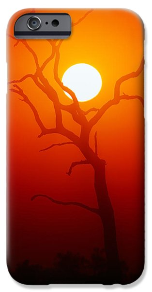 Glowing iPhone Cases - Dead Tree silhouette and glowing sun iPhone Case by Johan Swanepoel