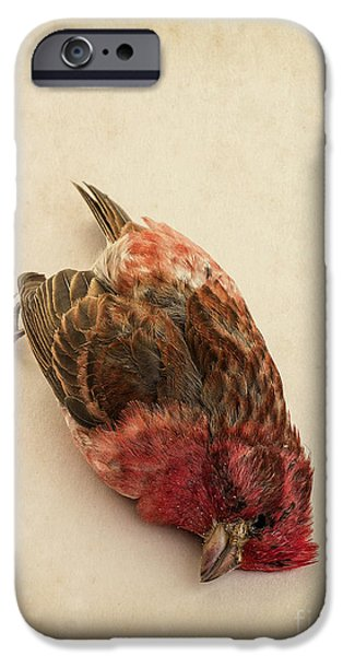 Aviary iPhone Cases - Death of the Innocent iPhone Case by Edward Fielding