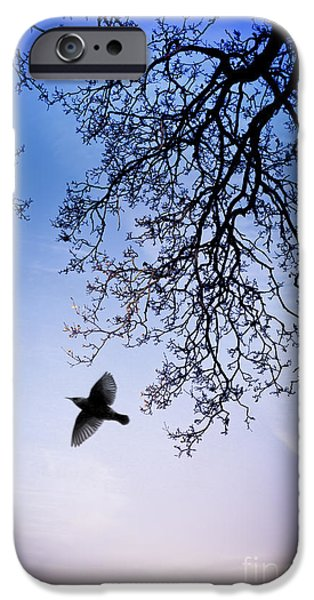 Animals Photographs iPhone Cases - December Chill iPhone Case by Jan Bickerton