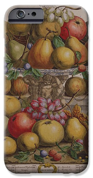 Berry iPhone Cases - December, From Twelve Months Of Fruits, By Robert Furber C.1674-1756 Engraved By Henry Fletcher iPhone Case by Pieter Casteels