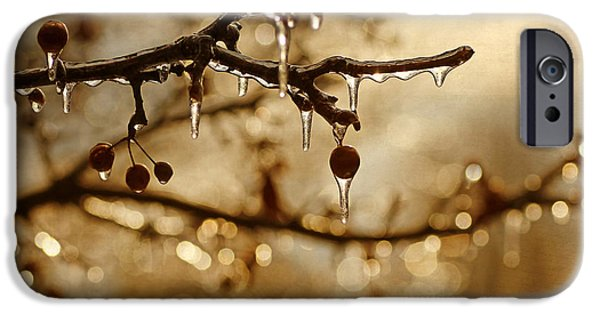 Snowy Day iPhone Cases - December Ice iPhone Case by Darren Fisher
