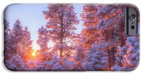 Tree Art Print iPhone Cases - December Sunrise iPhone Case by Darren  White