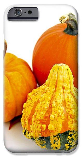 Decorative pumpkins iPhone Case by Elena Elisseeva