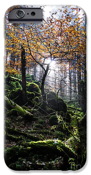 Forest iPhone Cases - Deep forest iPhone Case by Yuri Santin