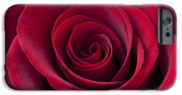 Cupid iPhone Cases - Deep Red Rose iPhone Case by Simon Kayne