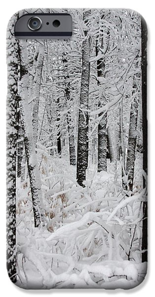 Winter In Maine iPhone Cases - Deep Snow In The Forest iPhone Case by Lynn-Marie Gildersleeve