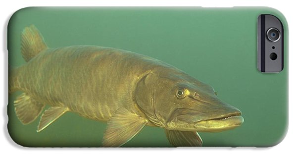 Muskie iPhone Cases - Deep Water Muskie iPhone Case by Engbretson Underwater Photography