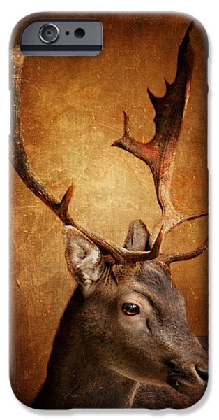 Animal Photography Mixed Media iPhone Cases - Deer iPhone Case by Heike Hultsch