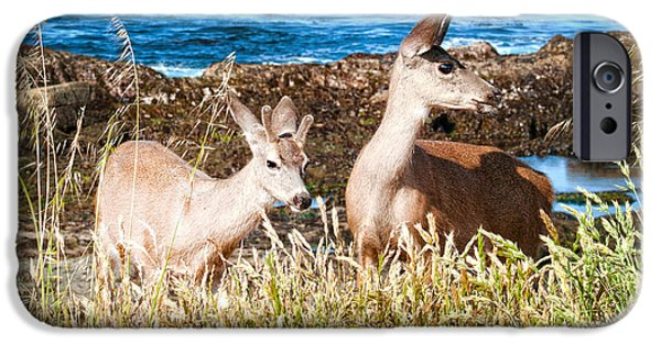 Famous Highway 1 In California iPhone Cases - Deer on the Beach at Point Lobos CA iPhone Case by Artist and Photographer Laura Wrede