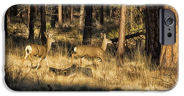 Deschutes River iPhone Cases - Deer on the Run iPhone Case by Belinda Greb