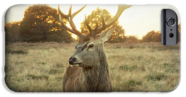 Animals Photos iPhone Cases - Deer iPhone Case by Violet Gray