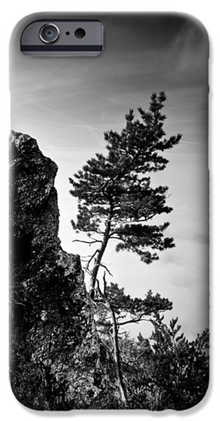 Pines iPhone Cases - Defiant iPhone Case by Davorin Mance
