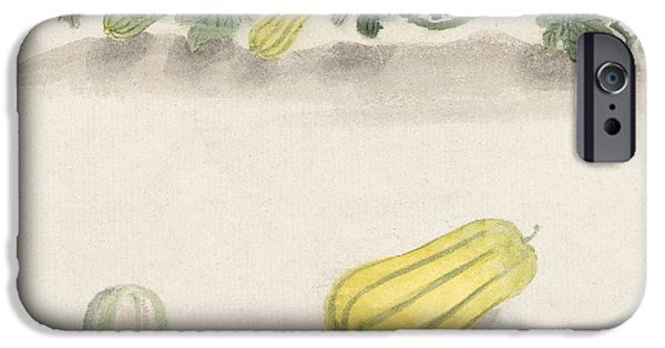 Squash iPhone Cases - Delicata squash iPhone Case by Aged Pixel