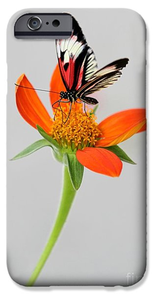 Piano iPhone Cases - Delicate Beauty iPhone Case by Sabrina L Ryan